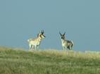 where the deer and the antelope play North Dakota